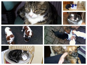 Collage of pet sitting scenes
