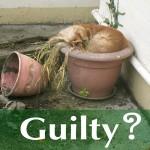 Puppy asleep in a flowerpot