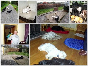 A mosaic of photos of dogs in Rosemarie's care